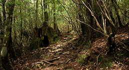 urdins-258-140-dinamic-enginy-guio Foto original: http://upload.wikimedia.org/wikipedia/commons/f/f2/Forest_in_Yakushima_30.jpg?uselang=ca